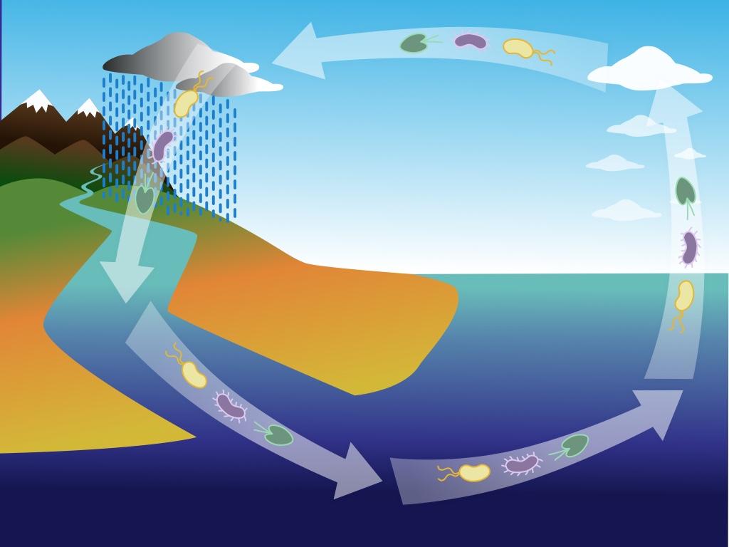 """¿Nuevas pandemias? Estudio postula que los microorganismos del planeta están conectados globalmente a través de una """"cinta transportadora"""""""