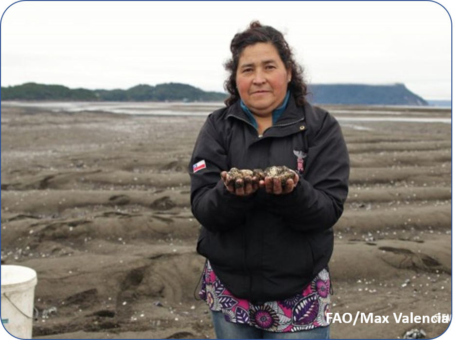 Océanos: Nuestro principal aliado natural frente al cambio climático